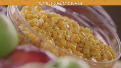 Tutte le qualità del mais