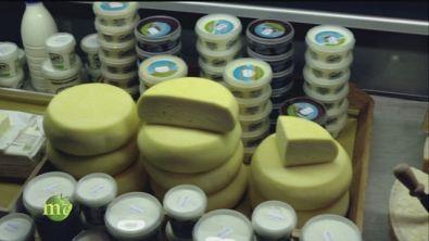 I formaggi freschi di fattoria