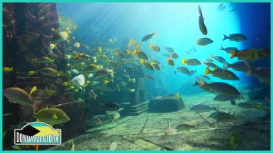 Le Bahamas un vero paradiso terrestre