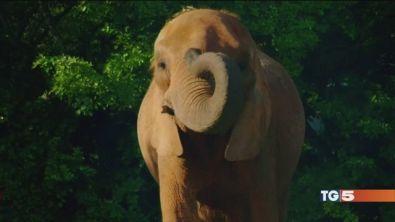 Salviamo l'elefante, dolcissimo gigante