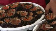 Fa caldo, ricci e sardine a rischio