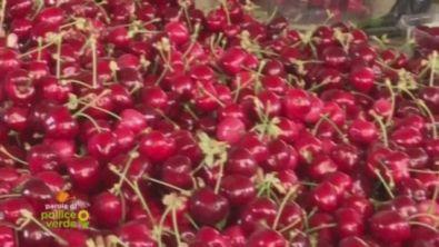 La ciliegia di Vignola