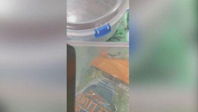 Spesa da brividi: dalla busta di insalata spunta un serpente velenoso