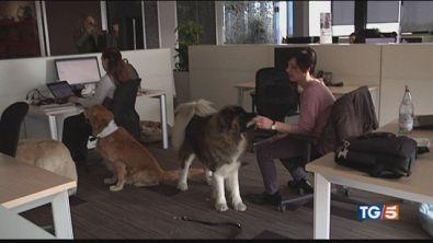 La cuccia in ufficio al lavoro con Fido