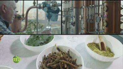 Il gin del Trentino