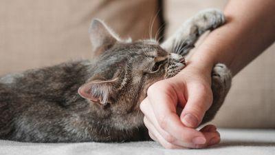 4 cose da non fare per non farsi odiare dai gatti