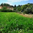Agricola Bencini Tommaso produzione verdure