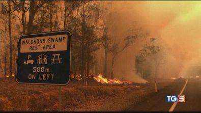 I roghi in Australia le cifre del disastro