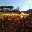 AAReP Associazione Apicoltori corsi di apicoltura