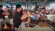 Covid-19: il mercato degli animali