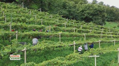 Secoli di viticoltori