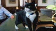 Va in pensione il gatto degli 007