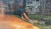 Paura nella vasca: alligatore addenta braccio di un custode