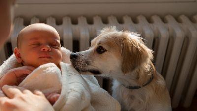 Come preparare il cane all'arrivo di un bebè