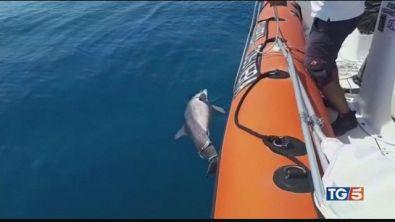 Strage di delfini sulle coste tirreniche