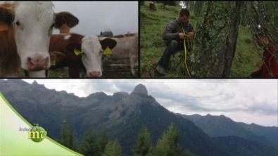 Custodi della montagna