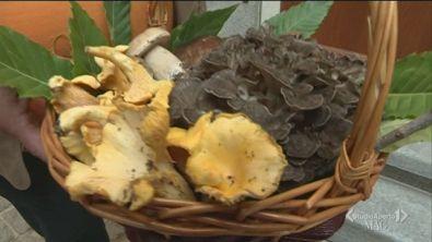 I protagonisti dell'autunno: i funghi