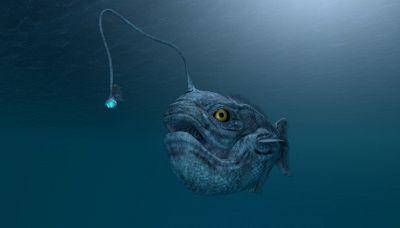 Lo strano pesce 'alieno' trovato sulle spiagge della California