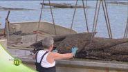 L'ostricoltura nell'isola di Oleron
