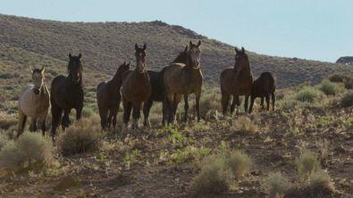 Il potere dell'acqua per i Mustang del Nevada