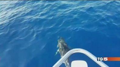 Delfini e tartarughe perle dei nostri mari