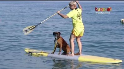 Lo Stand Up Paddle Dog