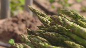 Le proprietà nutrizionali degli asparagi