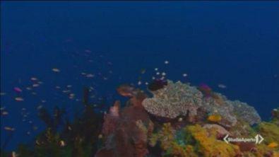 Mare caldo, coralli a rischio