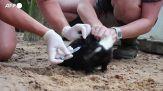 """Covid, zoo della Florida vaccina i suoi """"abitanti"""""""