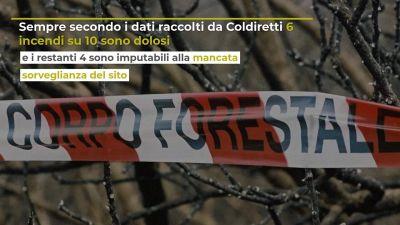 Incedi quanto costeranno agli italiani, la stima di Coldiretti