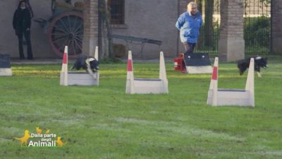 Il flyball