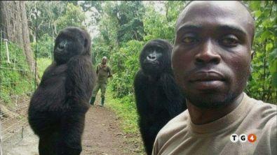 In posa con i gorilla