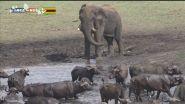 Zimbabwe, tra bufali ed elefanti