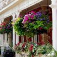 Piante e fiori da esterno
