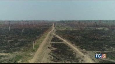 Amazzonia, deforestazione cresciuta del 300%