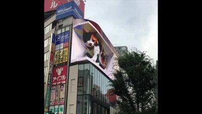 Un gatto gigante appare su un tabellone pubblicitario di Tokyo