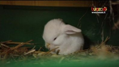 Razze di conigli