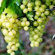 Agriturismo La Cà  prodotti biologici