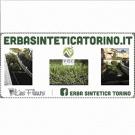 Davide Giardinaggio e Erba Sintetica Torino