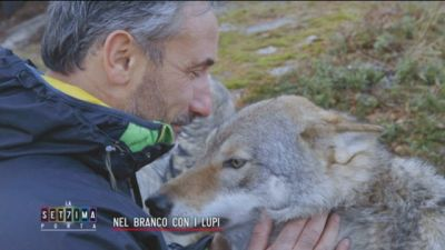 Nel branco con i lupi