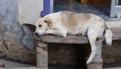 In India sfamare i cani randagi diventa un diritto