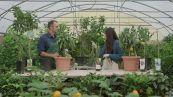 Come coltivare un frutteto in balcone