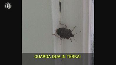 """Scuola a Napoli: """"Siamo invasi dalle cimici"""""""