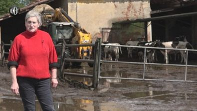 Salvate dal macello le 100 mucche di Cassina de' Pecchi
