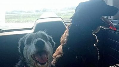 Nonna Rosetta e Black, la storia a lieto fine dei 'cani della spazzatura'