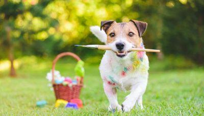 Rogan, il cane pittore diventato un fenomeno del web