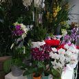 L'OASI DEI FIORI piante e fiori da giardino