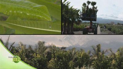 Sfumature di verde