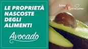 Le proprietà degli alimenti: avocado #sanoebuonissimo