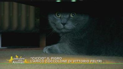 """""""Ciccio"""" e Vittorio Feltri"""